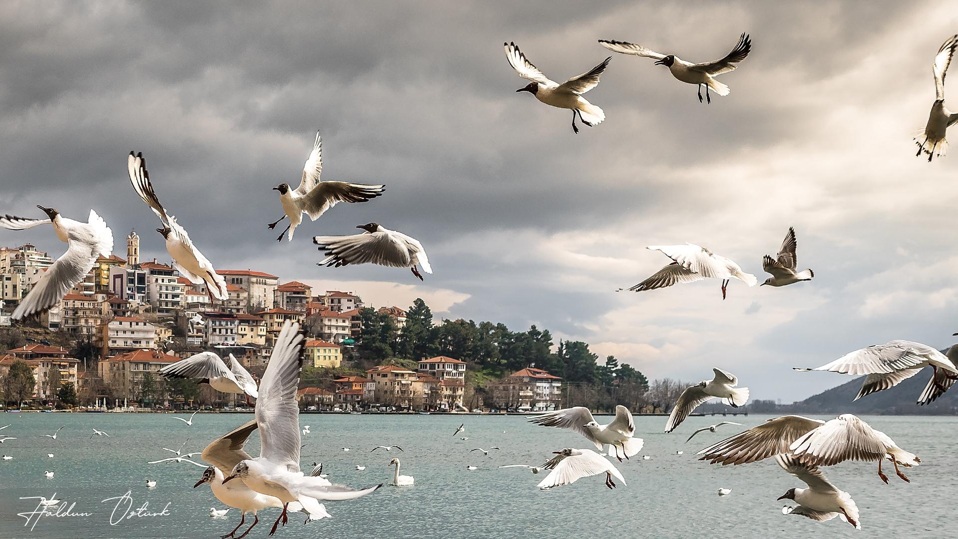 Kuşların Kavgası - Haldun Öztürk
